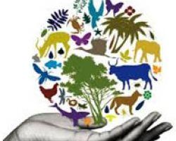 ბიომრავალფეროვნების საერთაშორისო  დღე